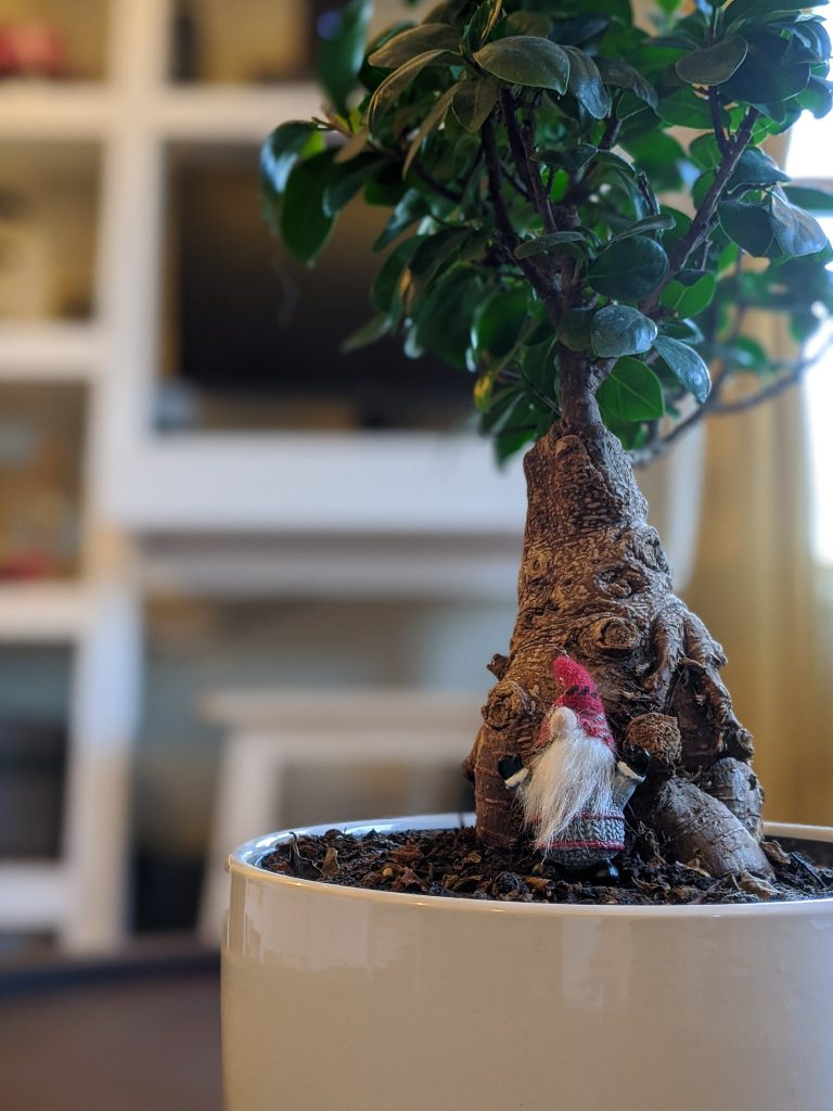 A picture of a Bonsai tree and a gnome