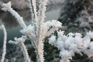 A photo of snow and ice crystals clinging to plants