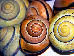 Shells // By Christina Matheson